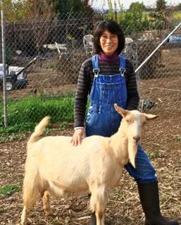 guernsey-goat